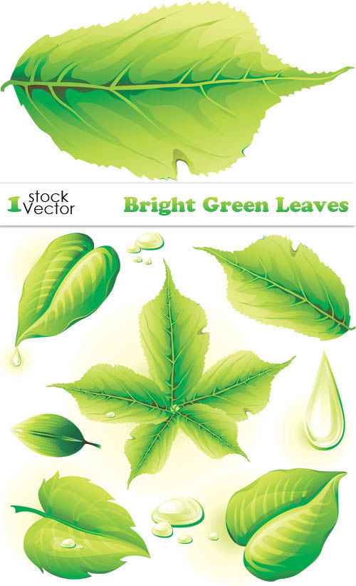 Зеленая листва в векторе. Bright green leaves