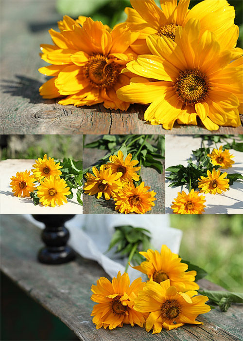 Photostock -Yellow flowers