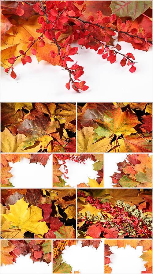 Сборка высококачественных осенних фонов с разноцветной листвой, цветами и я ...