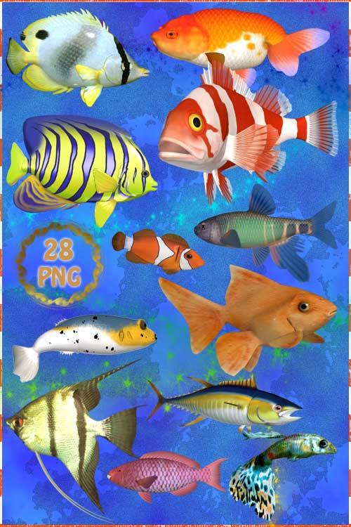 Клипарт PNG   Аквариумные рыбки