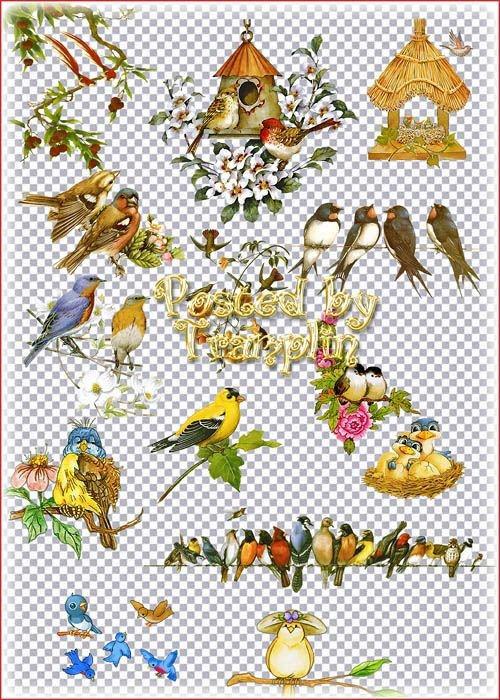 Клипарт на прозрачном фоне – птица
