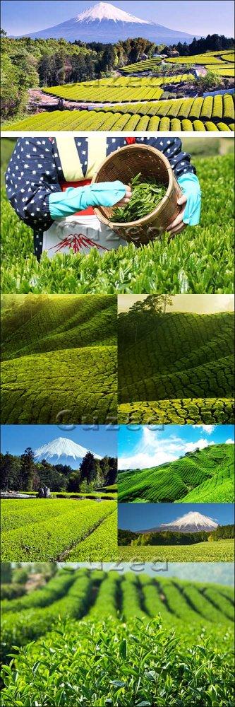 Горные поля зелёного чая/ Green tea Fields - Stock photo