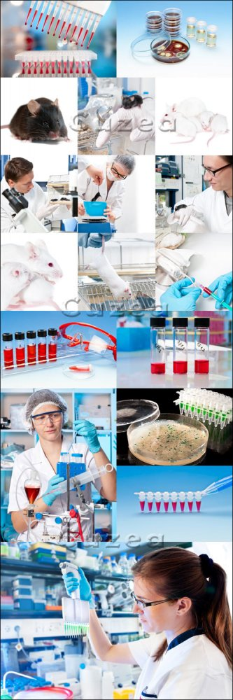 Экспериментальные работы в лаборатории/ Experimental work in laboratory wit ...