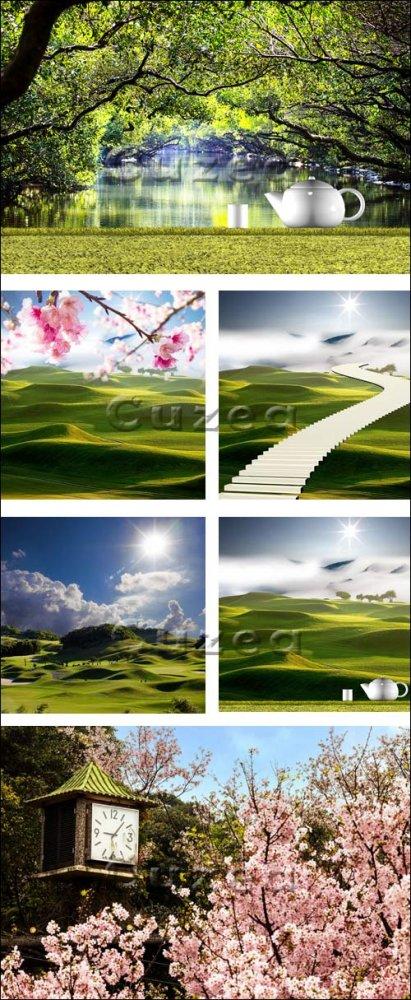 Чайные плантации, чайник и сакура/ Tea pot with nice green background and s ...