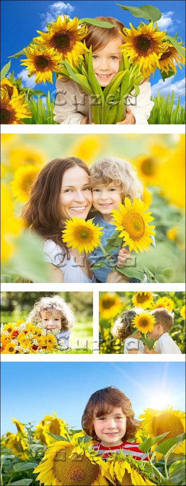 Люди в подсолнухах/ Peoples in sunflowers - Stock photo
