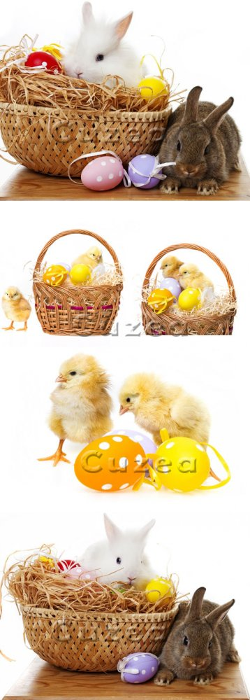 Цыпленок, кролик и пасхальные яйца/ Chickens, rabbits and easter eggs