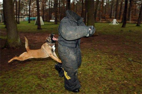 Шаблон для фотошопа - Собаковод и озверелая собака