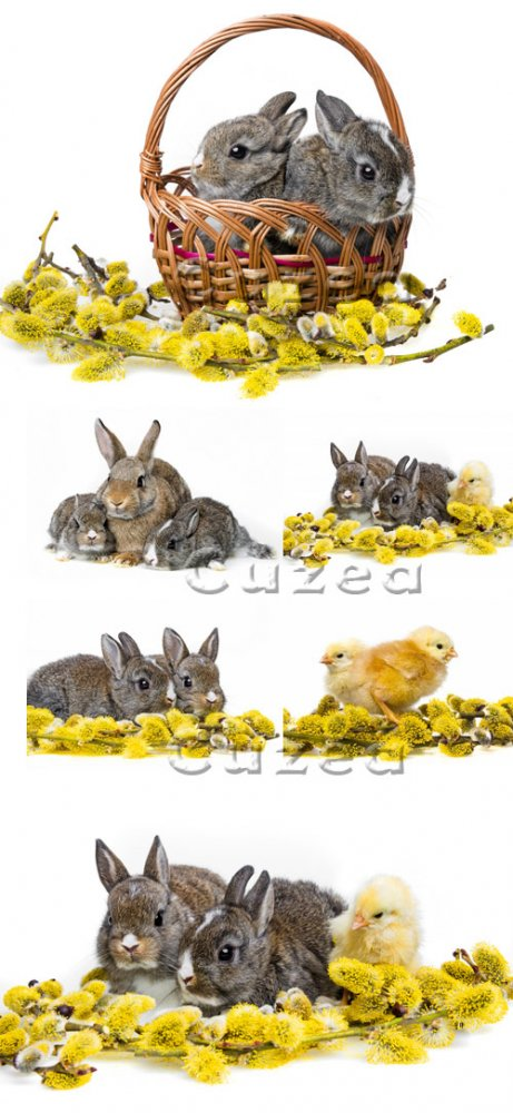 Кролики, цыплята и веточка вербы / Chickens and rabbits at easter, part 2