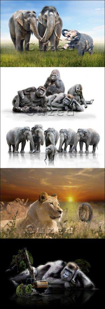 Слоны, обезьяны и львы на белом фоне и на фоне природы/ Elephants, monkeys  ...