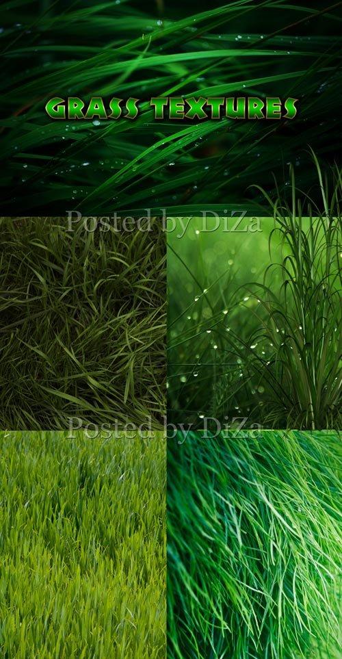 Текстуры зеленой травы