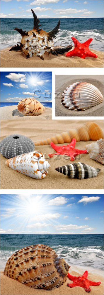 Ракушки на побережье/ Cockleshells on the summer coast - Stock photo