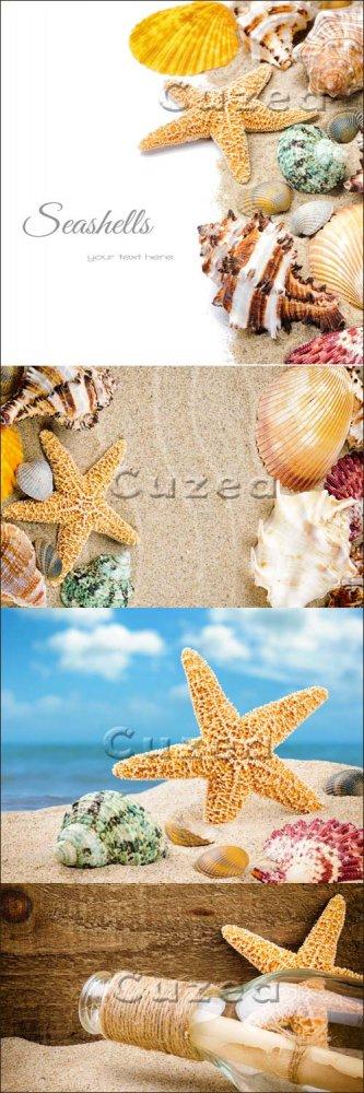 Фоны с ракушками и морской звездой/ Summer background - Stock photo