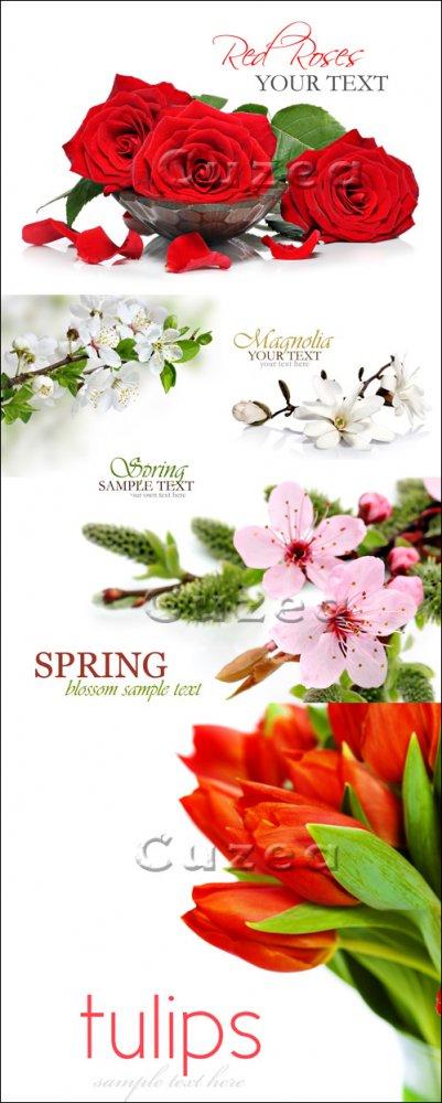 Фоны с цветами и местом для текста/ Flowers background - Stock photo