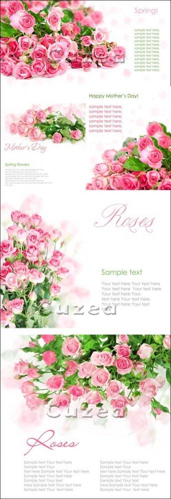 Фоны с розами к праздникам/ Roses  background - Stock photo