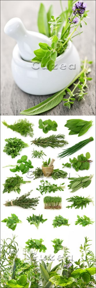 Ароматные травы и специи/ Fragrant herbs - Stock photo