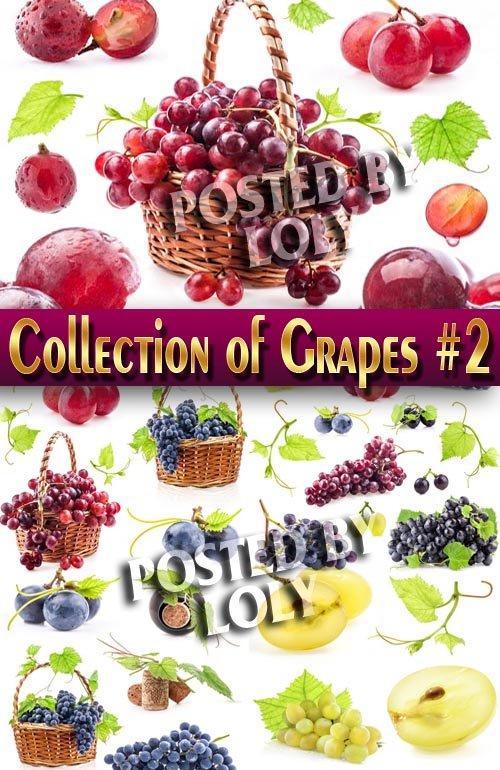Еда. Мега коллекция. Виноград #2 - Растровый клипарт