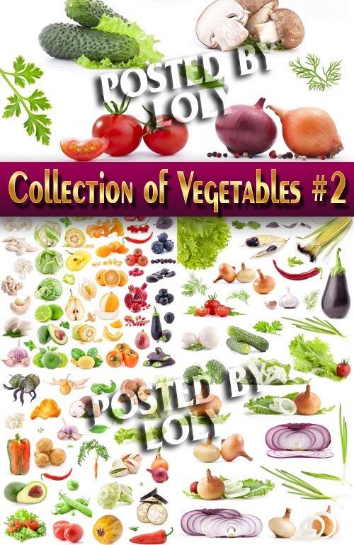 Еда. Мега коллекция. Овощи #2 - Растровый клипарт