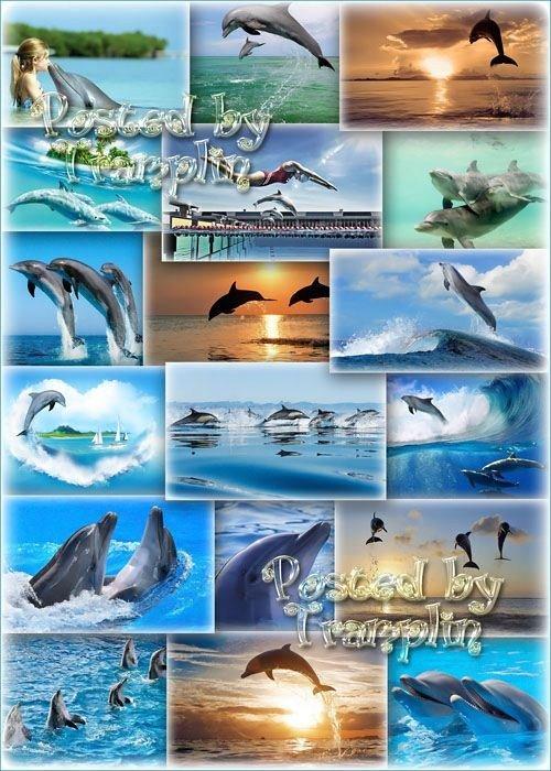Дельфины - Пьянящей грацией сплетённые морской - рождённые в аквамарине