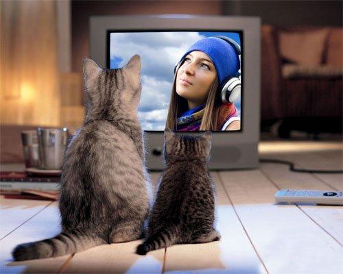 Рамка для фотошопа - Милые две кошки возле экрана