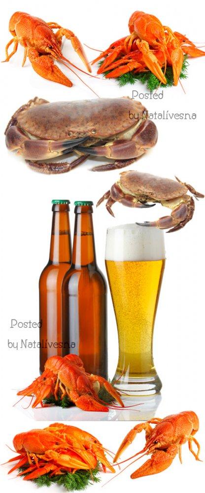 Пиво, крабы к Пиву / Beer, crabs to beer - Stock photo