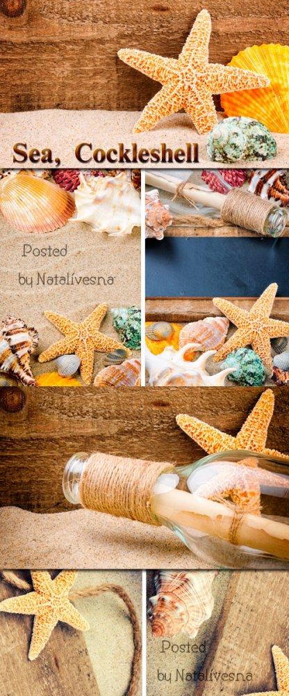 Море,  ракушки, пляж / Sea, cockleshells - Stock photo