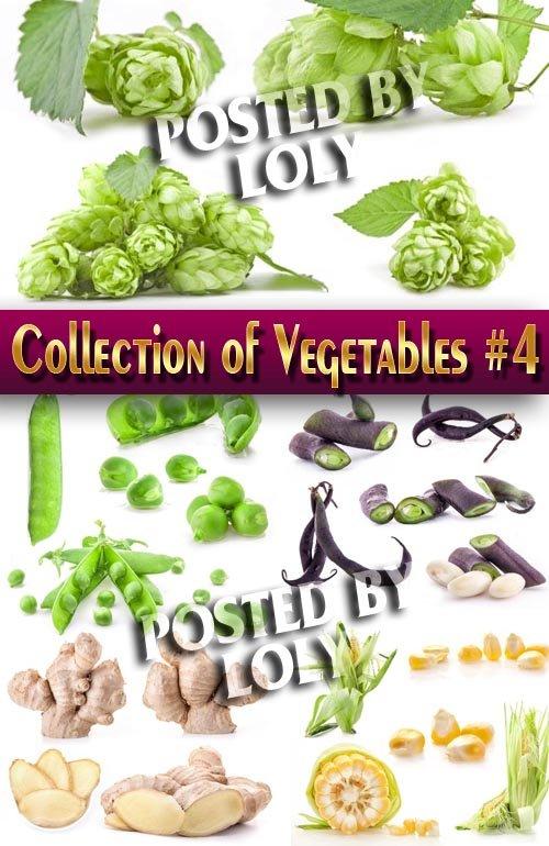 Еда. Мега коллекция. Овощи #4 - Растровый клипарт