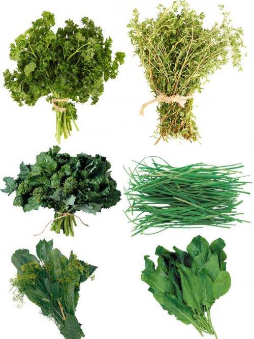 Фотосток: зелень (укроп, петрушка, щавель и др.)