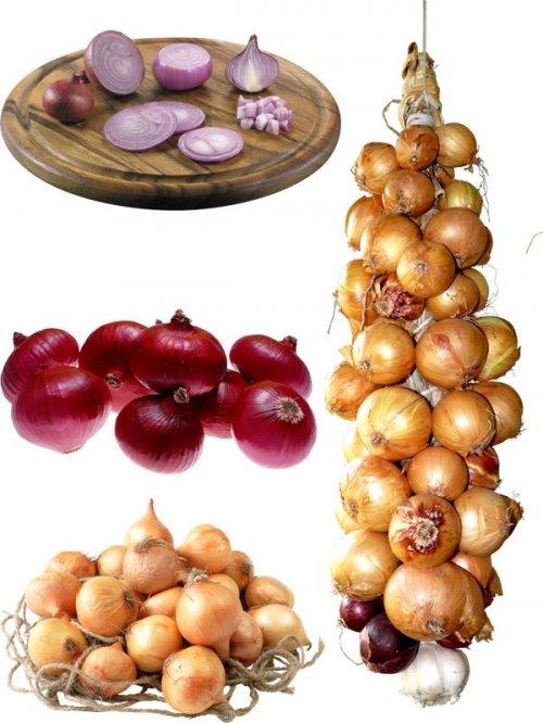 Фотосток: овощи - лук