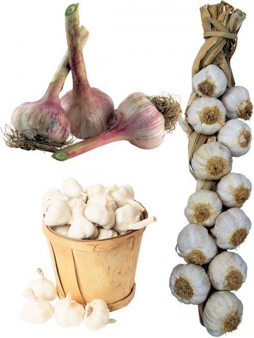 Фотосток: овощи - чеснок