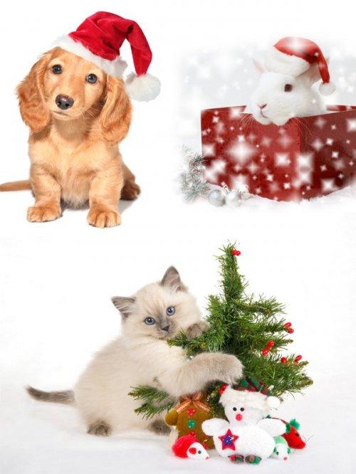 Фотосток: новогодние животные (коты, кролики, собаки)