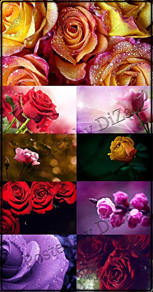 Роскошные фоны с розами