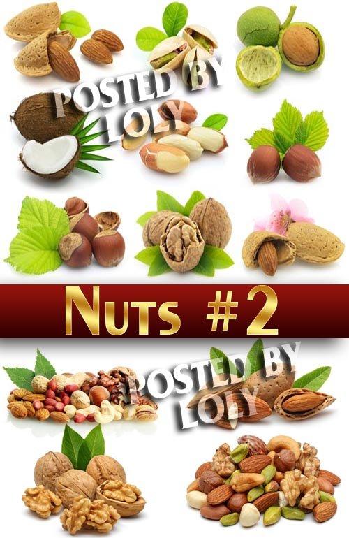 Орешки #2 - Растровый клипарт