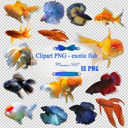 Клипарт PNG на прозрачном фоне - Экзотические рыбки