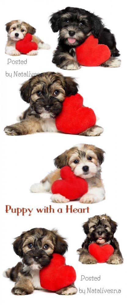 Милый щенок с сердечком на белом фоне / Puppy with a heart - Stock photo