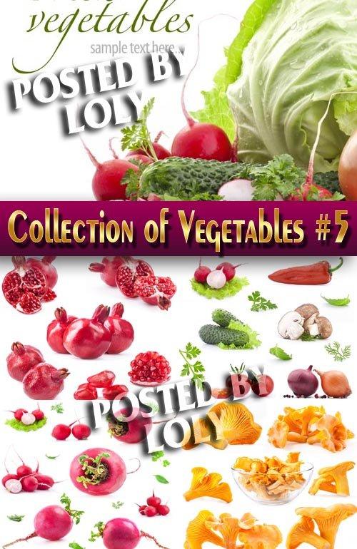 Еда. Мега коллекция. Овощи #5 - Растровый клипарт
