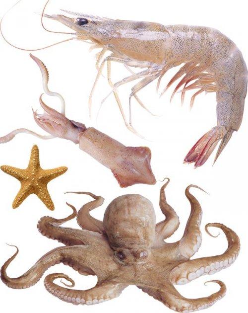 Фотосток: креветки, осьминоги, кальмары, морские звезды