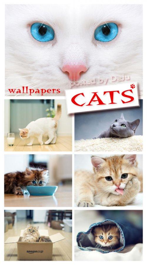 Коты, кошки и котята... Обои на рабочий стол