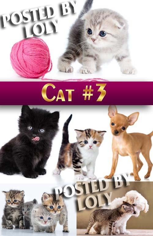 Чудесные котята #3 - Растровый клипарт