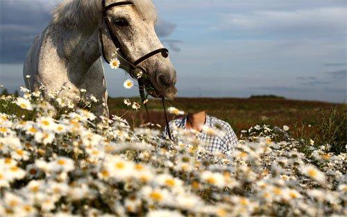 Шаблон для фотошопа - С белой лошадью в поле из ромашек