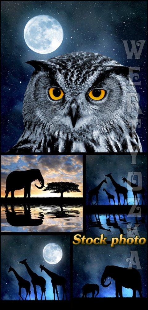 Сова, слон, жираф на фоне ночного неба / Owl, elephant, giraffe against the ...