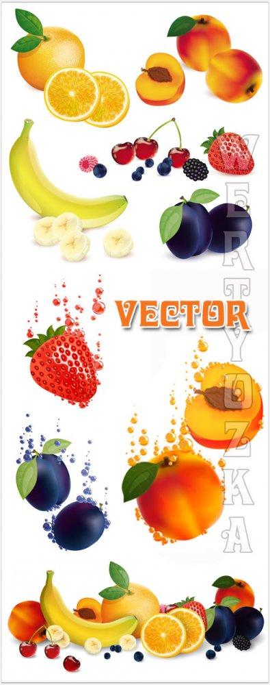 Фрукты в векторе, абрикос, банан, слива, клубника / Fruits vector, apricot, ...