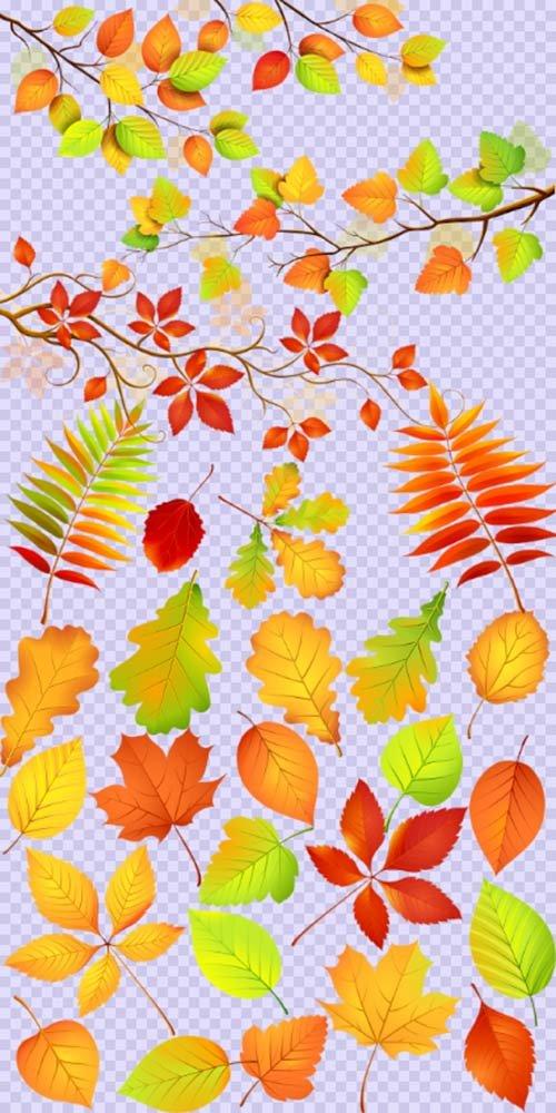 Клипарт - Осенние листочки с осенними веточками PSD прозрачный фон