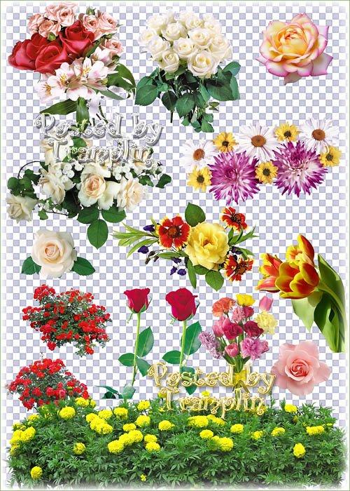 Розы, тюльпаны, хризантемы, ромашки, гладиолусы на прозрачном фоне