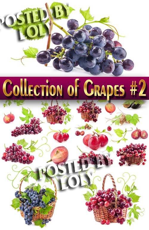 Еда. Мега коллекция. Виноград #3 - Растровый клипарт