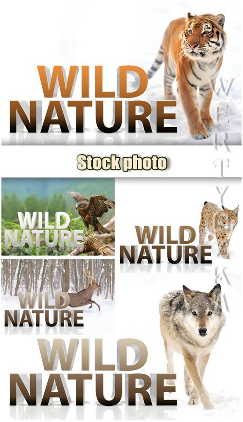 Дикая природа, тигр, волк, рысь, орел, олень / Wild nature, tiger, wolf, ly ...