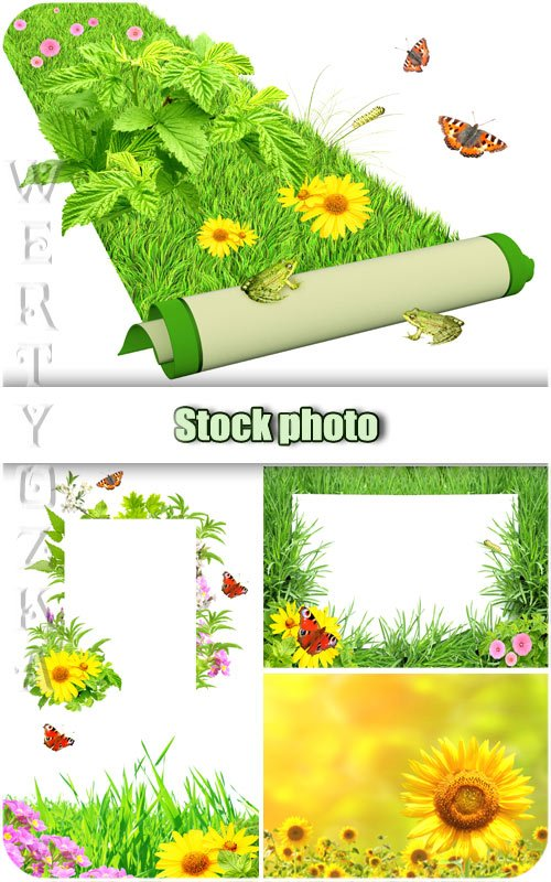 Цветы, зеленая трава и бабочки / Flowers, green grass and butterflies - Ras ...