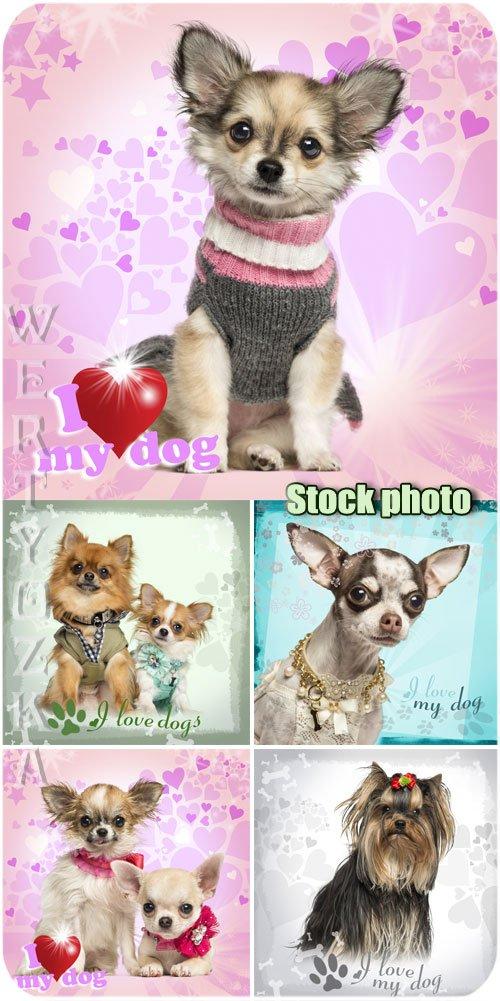 Любимые домашние животные, собаки / Beloved pets, dogs - Raster clipart