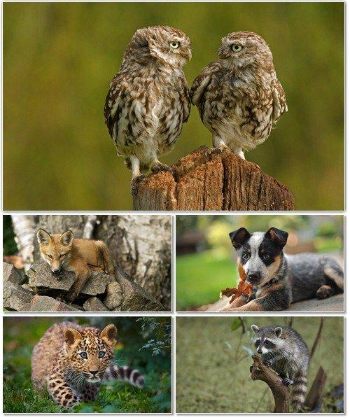 Веселые картинки с животными для фона рабочего стола 60