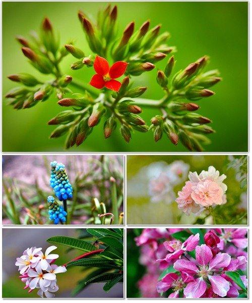 Цветы в сборнике обоев для рабочего стола 10