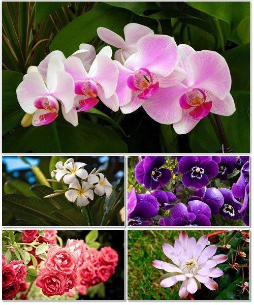 Цветы в сборнике обоев для рабочего стола 11